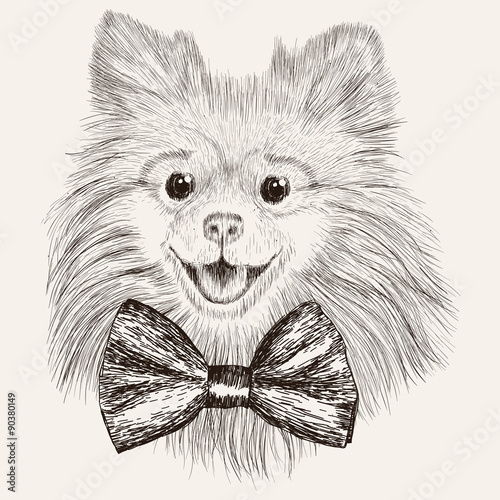 Sketch Spitz with bow tie. Hand drawn dog illustration. - 90380149