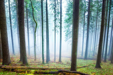 Mysterious fog in the green forest © Pavlo Vakhrushev