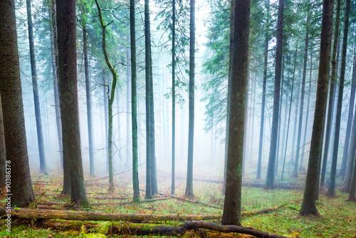 Mysterious fog in the green forest © Pavlo Vakhrushev