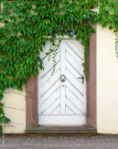stare-biale-drzwi-z-dzikim-winem