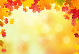 Fototapety autumn leaves background