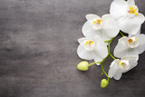 White orchid on the grey background. - 90479368
