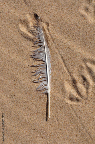 white Bird feather on a sand Poster