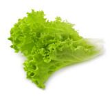 wet lettuce on the white background