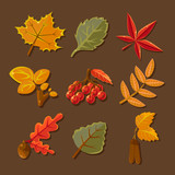 Set of colorful autumn leaves. Vector