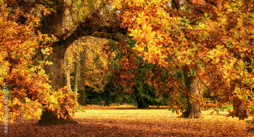 Fototapety, obrazy : Autumn scenery with a magnificent oak tree