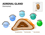Adrenal gland hormone secretion