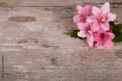 Tuinposter Hout Spring flower on rustic, vintage wooden background