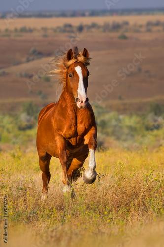 Beautiful horse run gallop in the field © callipso88