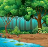 Fototapety River run through the jungle