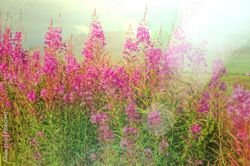 Panel Szklany Flowers on Alaska