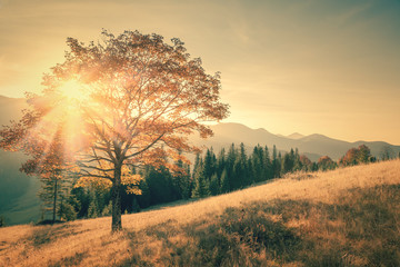 Autumn tree and sunbeam warm day landscape toned in vintage © Taiga
