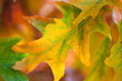 Amazing Colorful Autumn leaves background, soft focus, fall