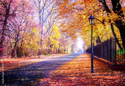 In de dag Oranje eclat autumn park