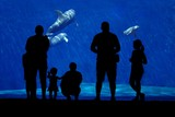Dolphin and family silhouette