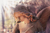 Fototapety golden angel in the sunlight (antique statue styled vintage)