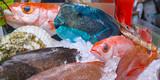 沖縄の魚介類
