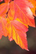 Amazing Colorful Autumn leaves background, soft focus, vertical
