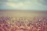 Fototapety Retro Summer Wheat Field Shallow Depth of Field