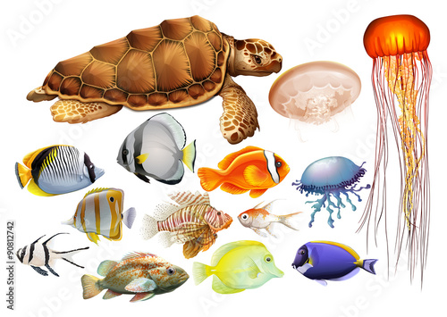 Poster Different kind of sea animals