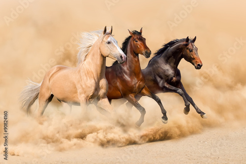 Foto op Canvas Foto van de dag Three horse run in desert sand storm