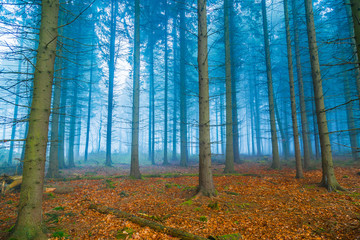 Mystischer Wald im nebel in blau und orange © wsf-f
