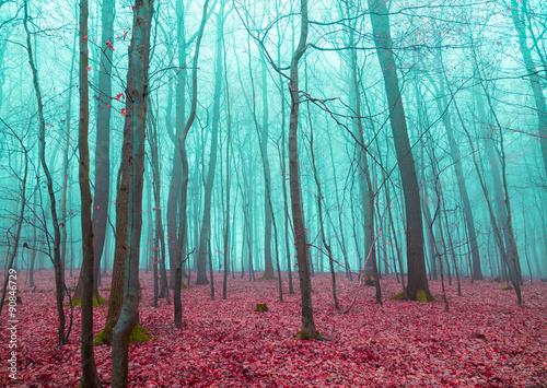 Mystischer Wald in rot und türkis
