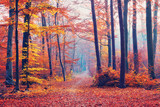 Fototapety Foggy autumn forest