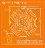 Blueprint diagram line drawing of fruit. Infographic of an orange cross section.