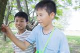 カブトムシを採る小学生