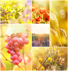 Beautiful nature collage