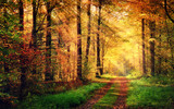 Autumn forest scenery with rays of warm light - Fine Art prints