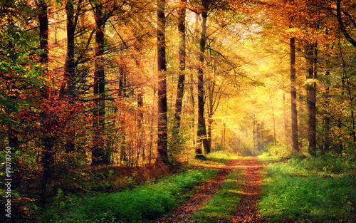 Fototapety, obrazy : Autumn forest scenery with rays of warm light