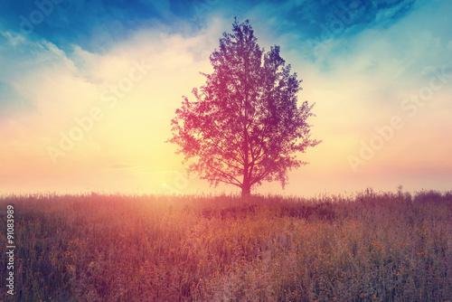 Landscape with  tree over sunrise - 91083989