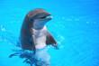 Śmiejący się delfin w Loro Park na Teneryfie