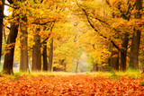 Fototapety Beautiful autumn forest in national park 'De hoge Veluwe' in the Netherlands