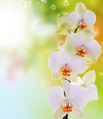Orchid flowers on abstract background