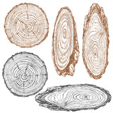Fototapety Wood texture of trunk tree sketch