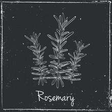 Rosemary ziół i przypraw.