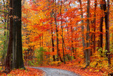 Fototapety Scenic trail between autumn trees