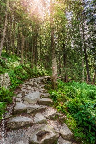 szlak-gorski-prowadzacy-na-szczyt-przez-las