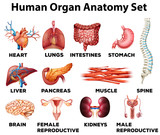 lidský orgán anatomie set