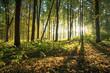 Obrazy na płótnie, fototapety, zdjęcia, fotoobrazy drukowane : forest