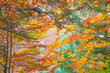 Colorful Autumn Leaves - beautiful sesonal horizontal