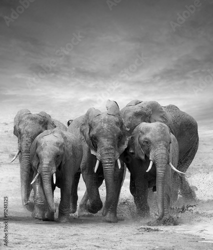 Zdjęcia na płótnie, fototapety na wymiar, obrazy na ścianę : Elephant