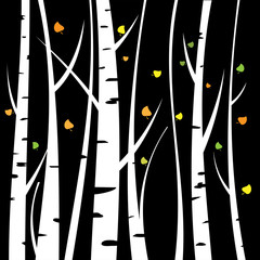 Birch three for you design