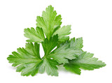 Parsley herb isolated - 91303977