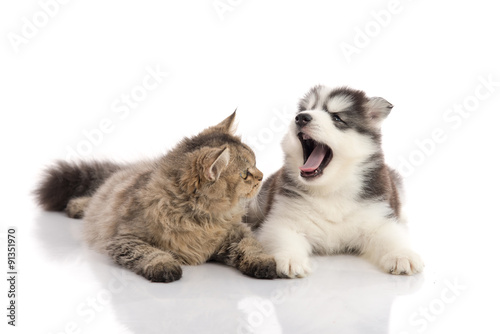 Poster Cat and dog together lying on a white background