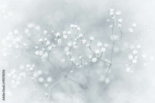 Small Defocused White Flowers (Gypsophila) with Vintage Effect as Natural Background - 91378556