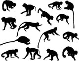 fifteen black isolated monkey silhouettes
